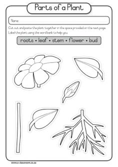 Of Part Seed Plant Diagram | CAPS-Grade1-Lifeskills-Term3-Plants-Seeds-Parts of a Plant