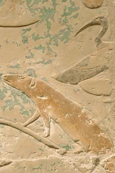 Sakhara – Saqqâra (Central Egypt), Tomb of Princess Sesh-seshet Idut, originally the tomb of Vizir Ihi, Old Kingdom, late 5th dynasty, altered into tomb of Idut,