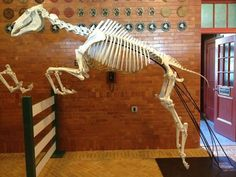 Interesting to see the skeletal structure. (Horse)