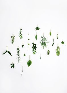 in love with this simple foliage wall idea from the merrythought! Gathered: Foliage Wall
