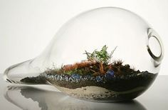 Blowing Bubbles Terrarium