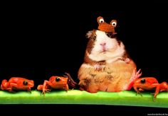 """I am a frog"""" Grumpy Face, Face Pictures, Rubber Duck, Christian, Fish, Pets, Animals, Animales, Animaux"""