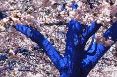 smurf blossoming