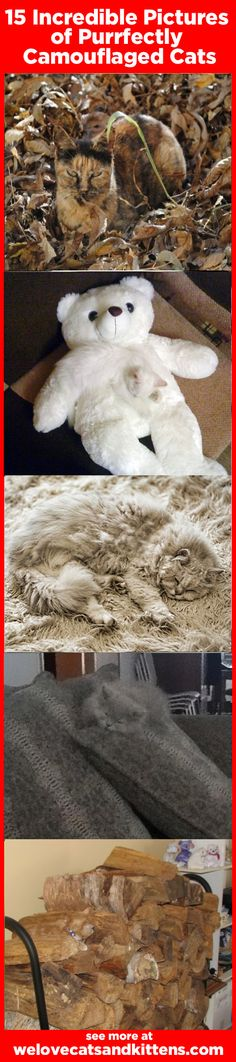 15 Incredible Pictures of Purrfectly Camouflaged Cats