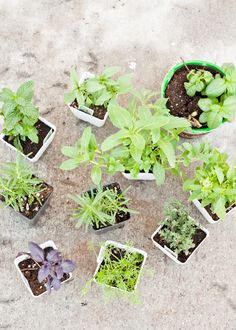 Helpful Guide! How to Plant a Successful Container Garden.  |   Design Mom
