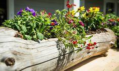 The Cheapest 24 DIY Garden Projects That Anyone Can Make Die billigsten 24 DIY-Gartenprojekte, die j Log Planter, Garden Planters, Diy Garden Projects, Diy Garden Decor, Wood Projects, Easy Projects, Small Flowers, Diy Flowers, Annual Flowers
