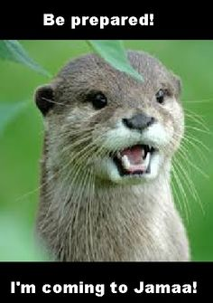 animal jam otter pictures - Google Search