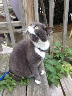 les plus beaux chats en photos 178 sur http://ift.tt/1oohFRS