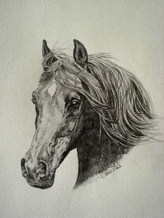 Dream horse, a present for Daisy who hopes to one day own her own dream horse.