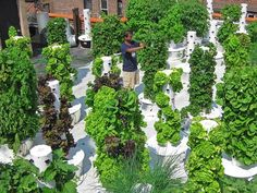 Urban farming in your backyard? There's a vertical aeroponic garden for that
