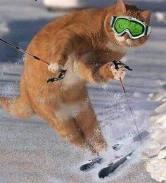 Freestyle ski cat