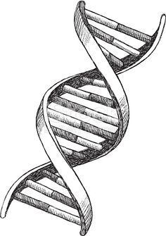 Vector illustration of DNA. Vector illustration of DNA. Biology Drawing, Dna Drawing, Biology Art, Pencil Art Drawings, Teaching Biology, Dna Tattoo, Tatoos, Dna Project, Tattoo Project