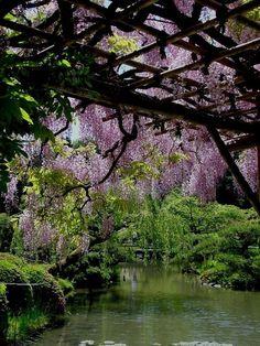 A large arboretum, run by the University of Washington....Seattle!