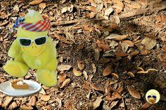 #Schatzsuche erfolgreich beendet. Statt #Mehlwürmer Kuchen im #Dschungel 😉😊 #ibes #daniele #ibes2018 #dschungel #dschungelcamp #dschungelprüfung #negroni #bigb #bigbird #cooler #gelber #erpel #yellow #drake #schrader #beckum #wow #awesome #picoftheday #instagood #followme Drake, Round Sunglasses, Mudpie