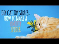 Cats Toys Ideas - :) Welcome to the Friskies Do-It-Yourself Toy Maker Series! Watch this video to learn how to make the perfect toy for your knotty kitty: the knotty spider! - Ideal toys for small cats Homemade Cat Toys, Diy Cat Toys, Pet Toys, Raising Kittens, Purina Friskies, Kitten Toys, Cat Hammock, Ideal Toys, Yellow Cat