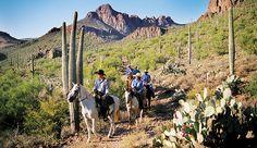 Tucson Horseback Riders and Cactus