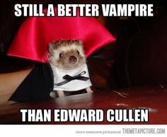 Google Image Result for http://static.themetapicture.com/media/funny-hedgehog-vampire-dracula-costume.jpg