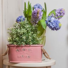 🌸🌷 Bunches of lilac, pink and baby-blue grow steadily in front of you! Check out our Hyacinths and Antique - Flower Pots! 💕💙