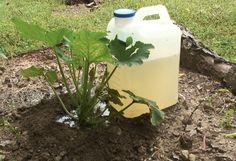 Homemade Drip Irrigation for Fertilizing Garden