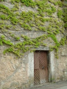 Kitzingen, Germany ivy and old door Kitzingen Germany, World View, Ivy, Travel Destinations, House Styles, Places, Germany, Road Trip Destinations, Destinations