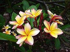 piante e fiori particolari - Cerca con Google