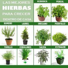Top 9: hierbas para cultivar en casa