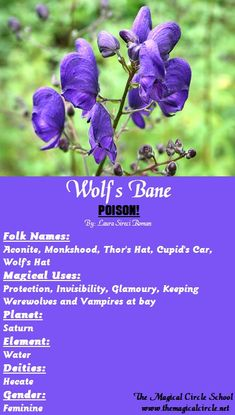 Wolf's Bane Magical Properties - The Magical Circle School - www.themagicalcircle.net