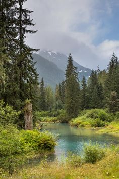 Fish creek, flanked by the forest hillsides of the Tongass National Forest, Hyder, Alaska