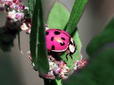Amazing Pink Insects in Nature ~ The Nature Animals