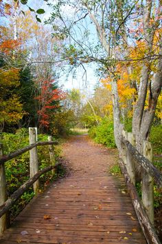 Lover's Lane (Prince Edwards Island) [photographer unknown]