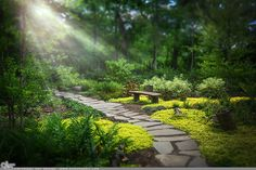 """Picture-A-Day (PAD n.2196) """"Wishes Come True"""" ~Amy, DangRabbit Photography Beautiful garden, Long Island, NY"""