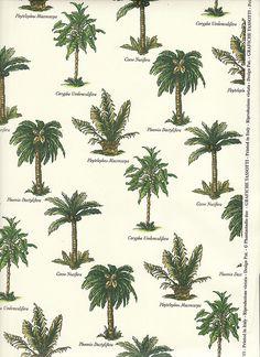Palm Tree Varieties