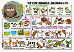 MIS COSAS DE EDUCACIÓN ESPECIAL .: Aprendemos a describir personas, objetos, animales y paisajes....