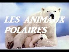 Animaux polaires ( pour enfants ) - YouTube Polar Animals, Animals For Kids, Polar Bear, Fun Facts About Animals, Animal Facts, Rare Albino Animals, African Grey Parrot, Bear Photos, Pet Day