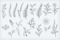 Botanical Decorative Elements by Solana on @creativemarket