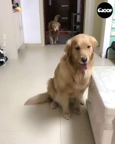 Cute Funny Dogs, Cute Funny Animals, Funny Cats, Cute Animal Videos, Cute Animal Pictures, Funny Dog Videos, Cute Dogs And Puppies, Doggies, Cute Little Animals