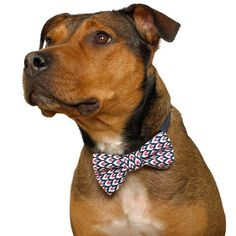 Doggy Bow Ties - perfect for the hip hound about town #dog #dogaccessories #cute #design #fashion