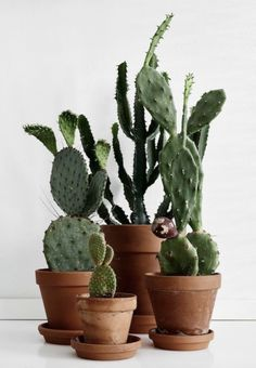 cool cactuses