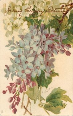 Lilacs ~ by Catherine Klein