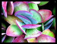 Pretty in Pink... Blue... Yellow... Green | Flickr - Photo Sharing!