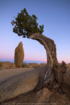 An oblong rock and juniper tree frame the moon in this high desert landscape image from Joshua Tree National Park. The soft light of post sunset fills the cloudless sky of summer in one of California's most unique national parks. Joshua Tree National Park, Us National Parks, High Desert Landscaping, Desert Landscape, Mother Earth, Mother Nature, Joshua Tree Camping, Juniper Tree, Desert Road