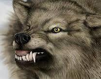 Resultat d'imatges de dibujos lobos para colorear