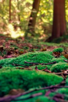 forest floor moss