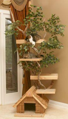 Je trouve de temps en temps sur le net des idées d'aménagements sympas pour nos chats ,pour beaucoup on peut s'en inspirer et sortir le...