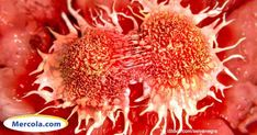Despite the most advanced cancer treatment known to oncologists, many cancer diagnoses remain a death sentence.