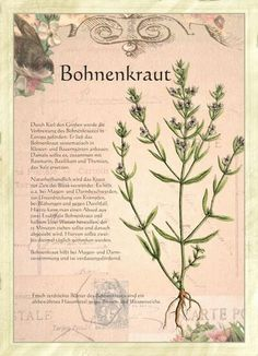 All pictures from the picture book Plant Illustration, Botanical Illustration, All About Plants, Herbal Essences, Spices And Herbs, Greenhouse Gardening, Healing Herbs, Fantastic Art, Medicinal Plants