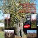 Manual: Evolución de la fruticultura y poda de los árboles frutales ecoagricultor.com