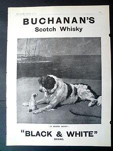 1911 black & white scotch whisky dog and puppy ad