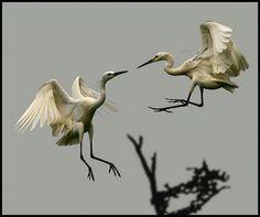 Mid air dancing