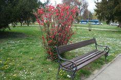 Klupa za odmor u parku kralja Držislava